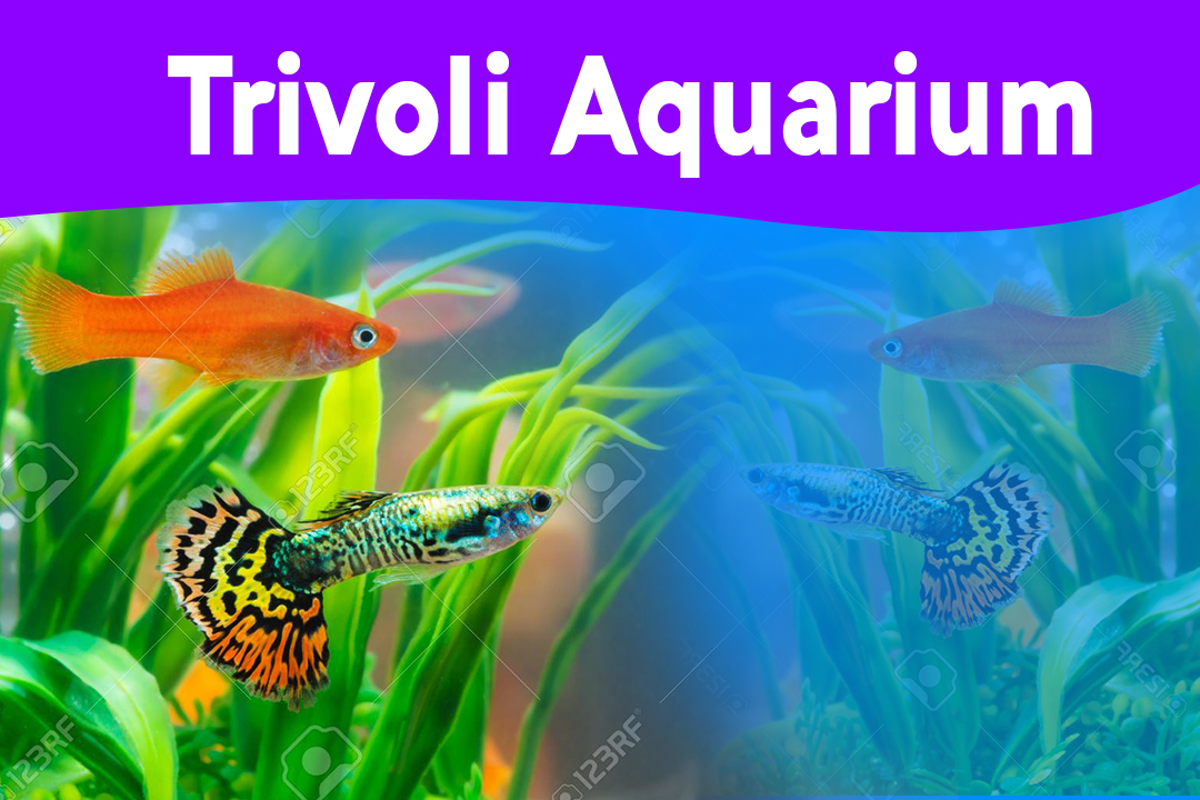 Trivoli Aquarium -trivoli-aquarium-aquarium in nawala-nawala trivoli aquarium-nawala aquarium-srilanka