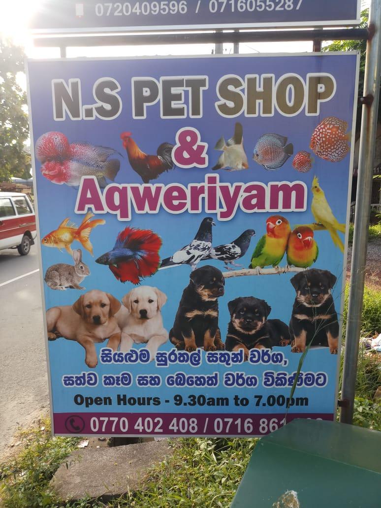 N.S PET SHOP-athurugiriya pet shop-pet shop in athurugiriya-animal sale athurugiriya-athurugiriya pet shop-n.s pet shop athurugiriya-pet medicine athurugiriya-pet food athurugiriya-athurugiriya pet foods-athurugiriya-srilanka.
