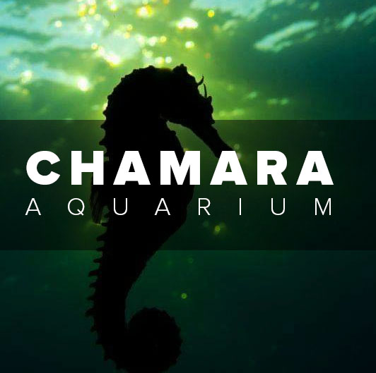 CHAMARA AQUARIUM-borella aquarium-aquarium in borella-air pump borella-borella fish tank-fish food borella-fish exporters borella-borella fish tank-borella aquarium-aquarium in borella-chamara aquarium borella-borella fish medicine-fish medicine borella-borella-srilanka.